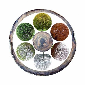 Ayurveda and natural rhythms of nature